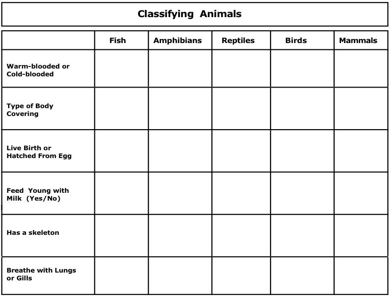 image result for amphibians worksheets education science pinterest amphibians and worksheets. Black Bedroom Furniture Sets. Home Design Ideas