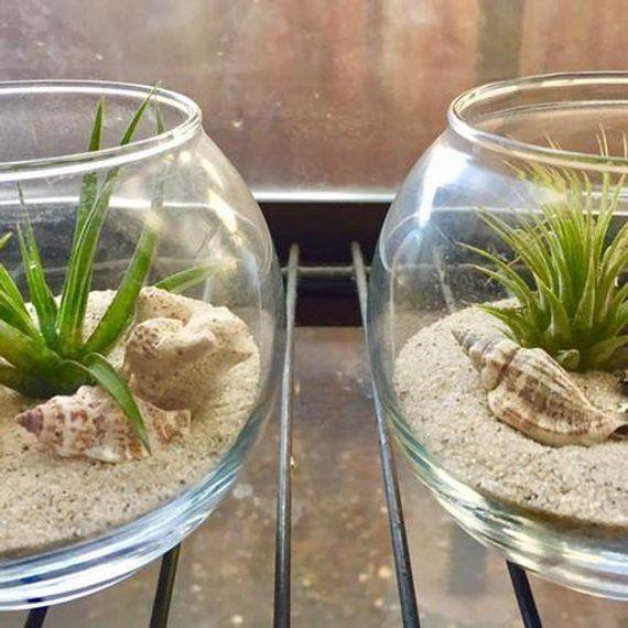 Glass Terrarium With Air Plants Kit To Make Terrarium Diy Kit To
