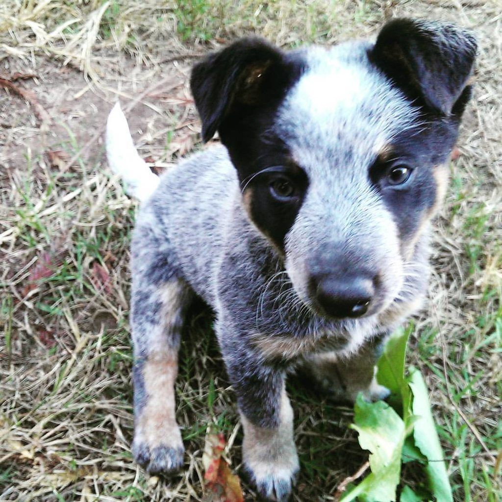 English Vocabulary Animals Female And Baby Names Farm Animals