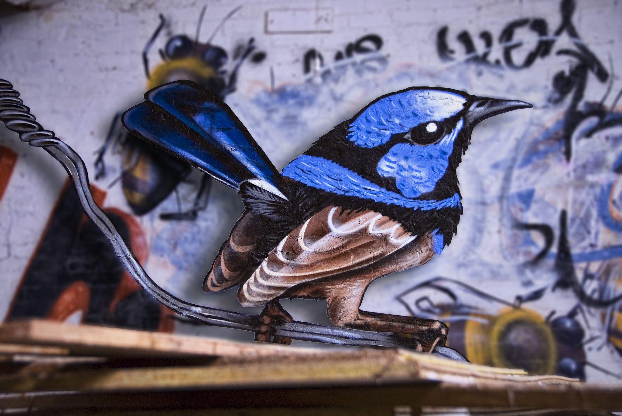 https://flic.kr/p/j5gtoe   Superb fairy wren   Blue wren artwork by Yo Snowy!
