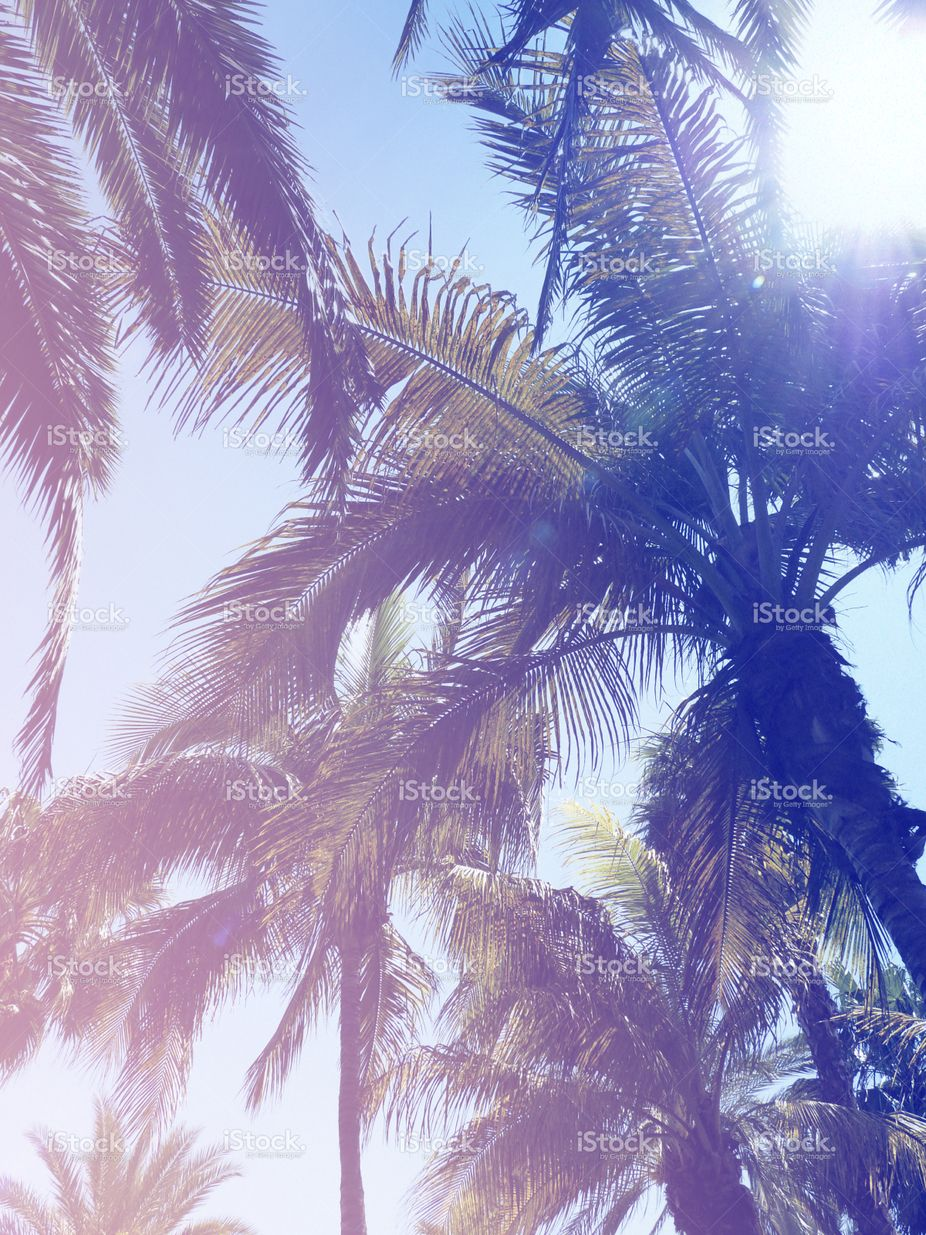 Coconut Palm Trees Perspective View Blue Sky Vertical
