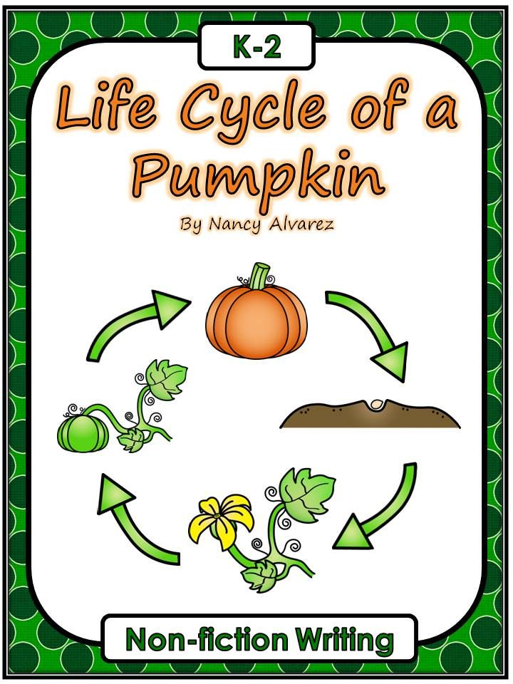 Life Cycle of a Pumpkin Freebie Teaching with Nancy