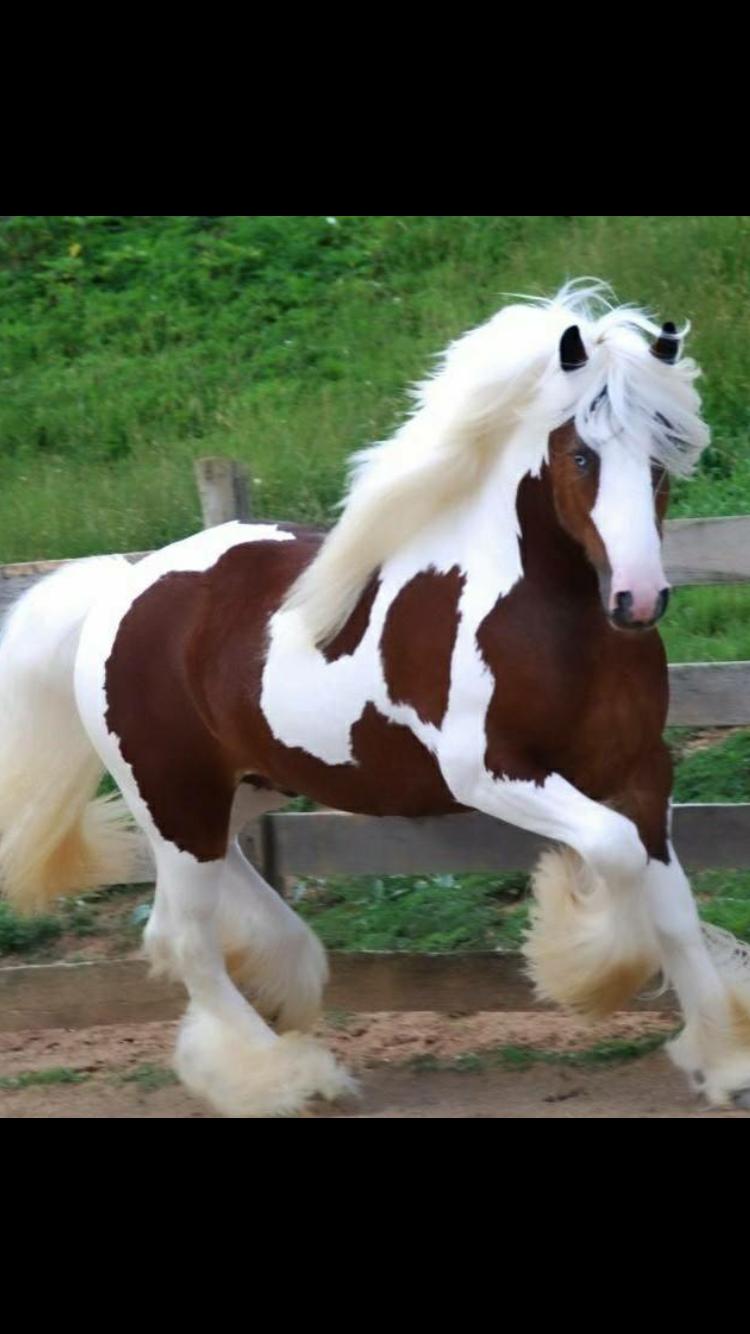 Cowboy Riding A Horse Clip Art Horses Art Images