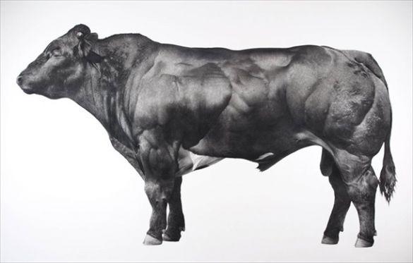 JONATHAN DELAFIELD COOK Bull 2014