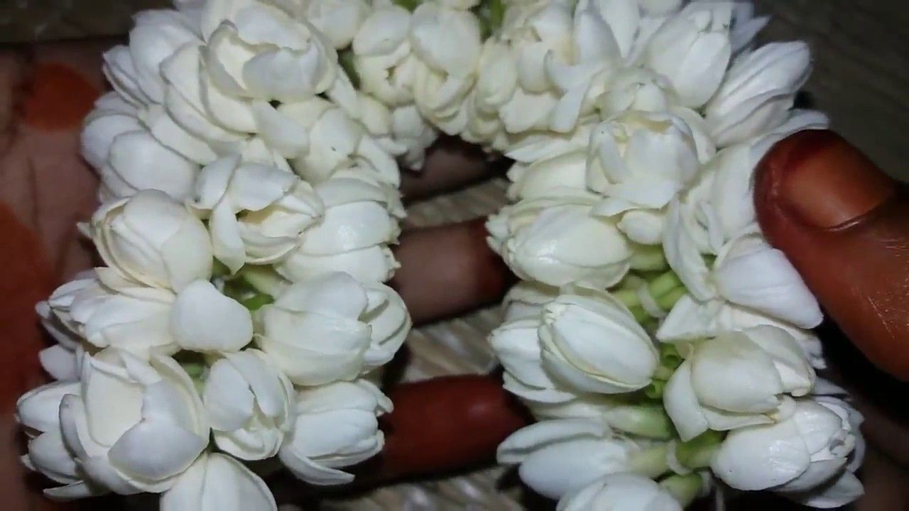 Different way to closely string jasmine flowers how to tie jasmine different way to closely string jasmine flowers how to tie jasmine flo izmirmasajfo
