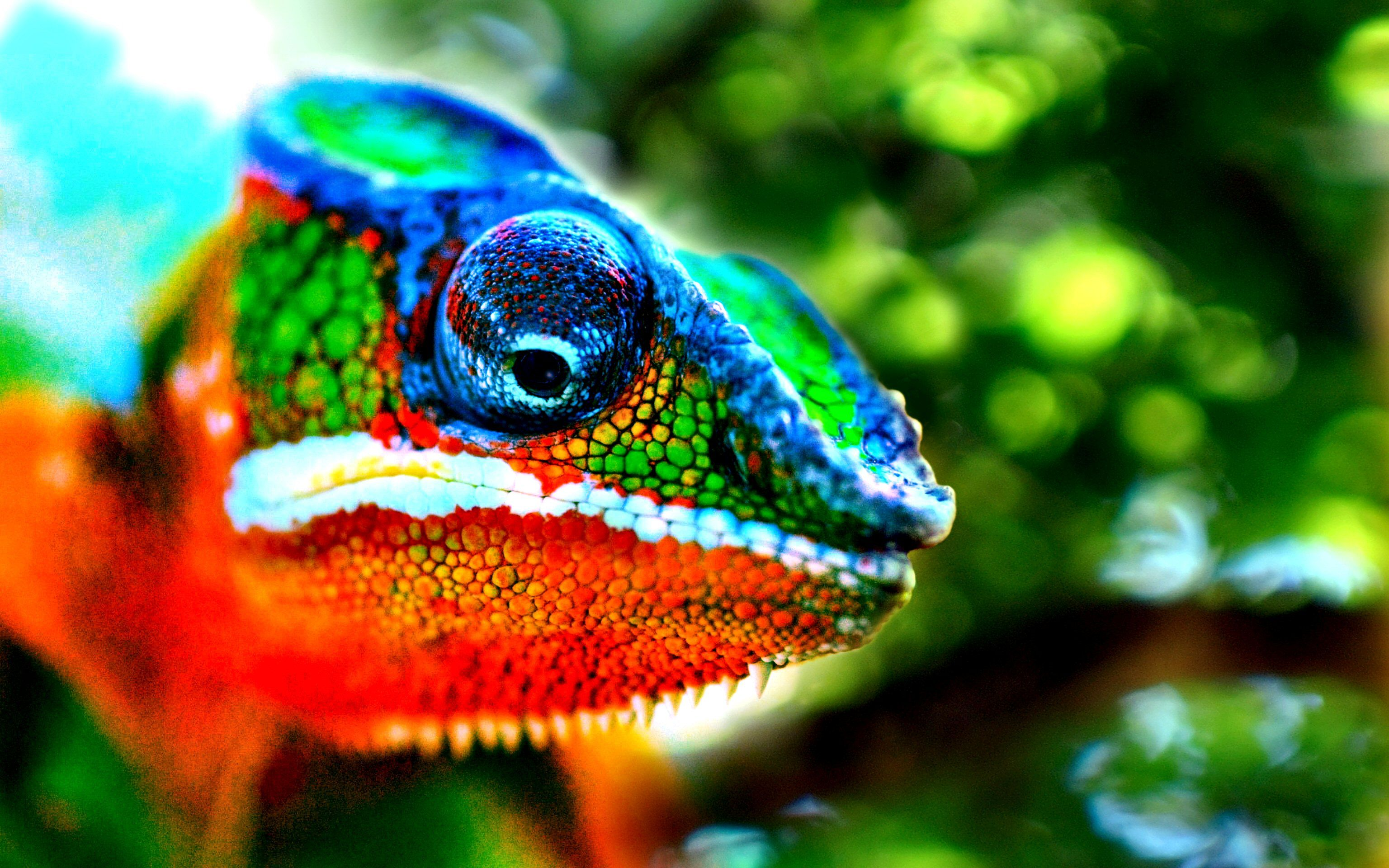 Animal Desktop Backgrounds High Definition Chameleon トカゲ