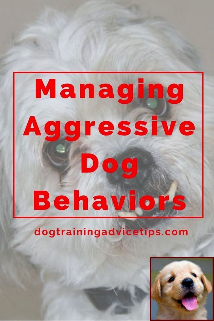 Dog Behavior Towards New Puppy And Clicker Training Dog Tricks