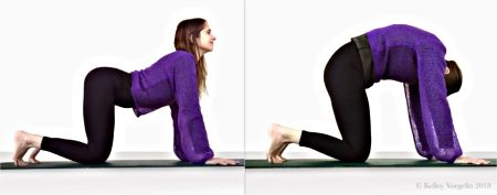 cow / cat pose in yoga with images  yoga poses poses yoga