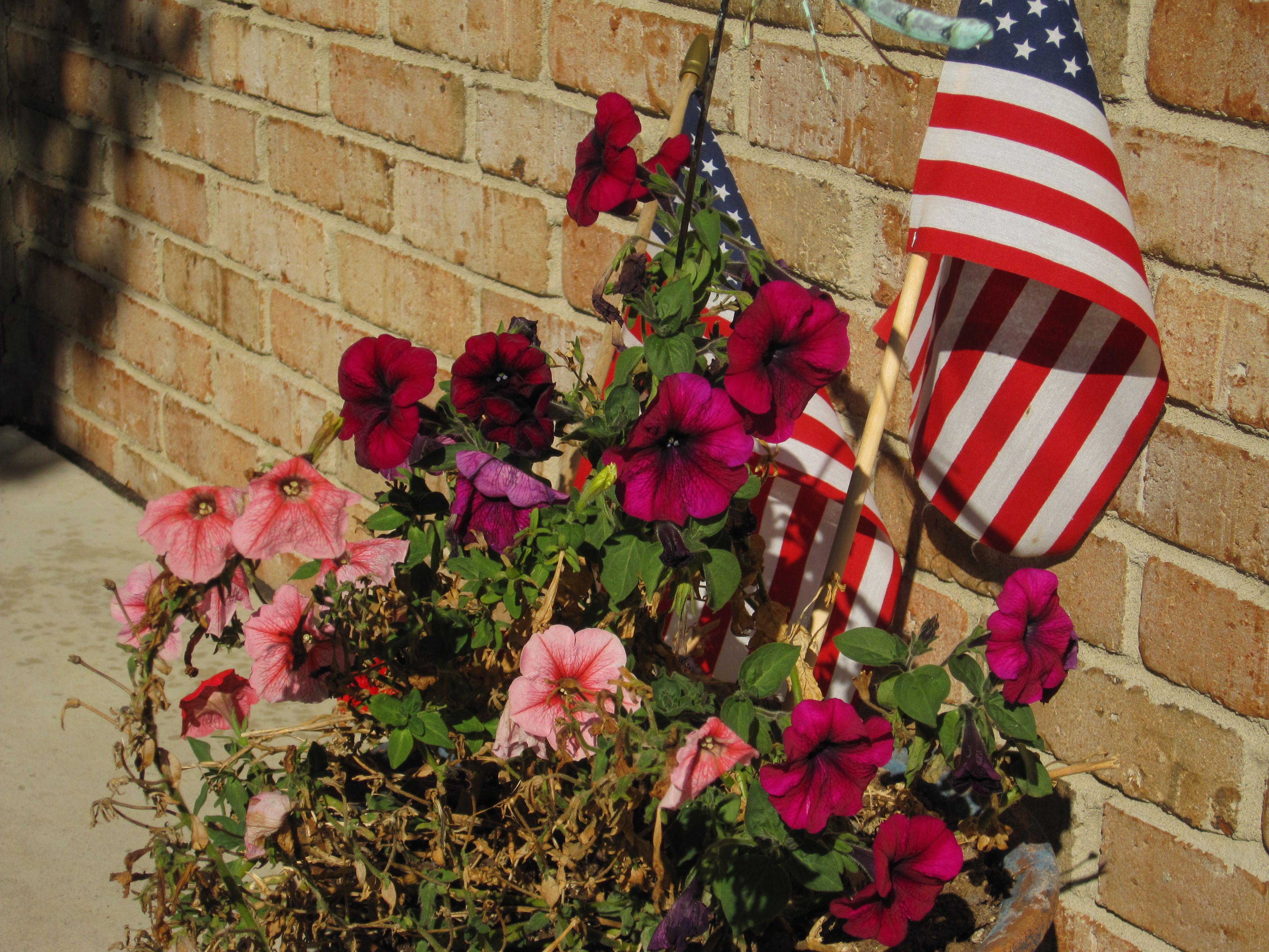 America the Beautiful | Flower Garden | Pinterest | Gardens