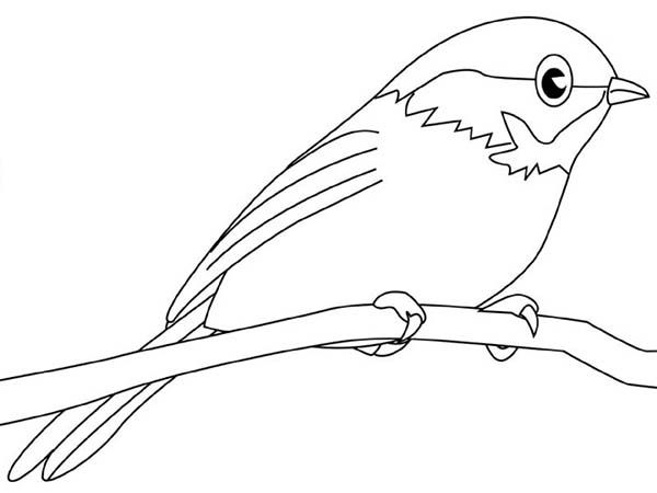 Chickadee Chickadee Picture Coloring Page Bird Coloring Pages Chickadee Coloring Pages
