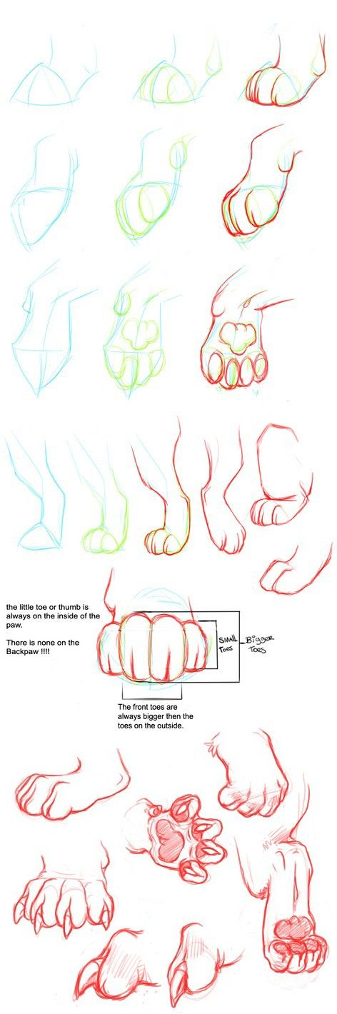3) Tumblr | tutorials | Pinterest | Cat paws, Design model and Anatomy