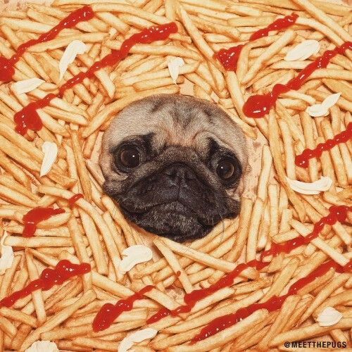 Pin By Frenchyfries On French Fries Pugs Dogs Animals