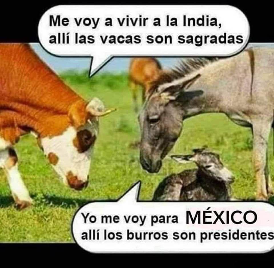 Pin By Tony Rosado On Humor De Media Semana Funny Humor Animals