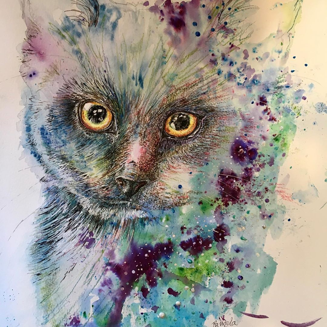 My Cat Wont Eat Or Drink What Can That Mean With Images Kitten Rescue Animal Paintings Cats