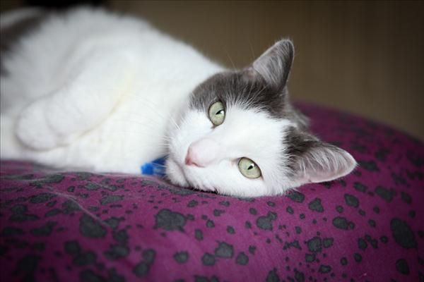 Hello I M Tigga A Quiet But Loving Boy Seeking A Safe And Cosy New Home Where I Don T Have To Worry About Scary Sounds Or Unpre Adoption Scary Sounds Animals