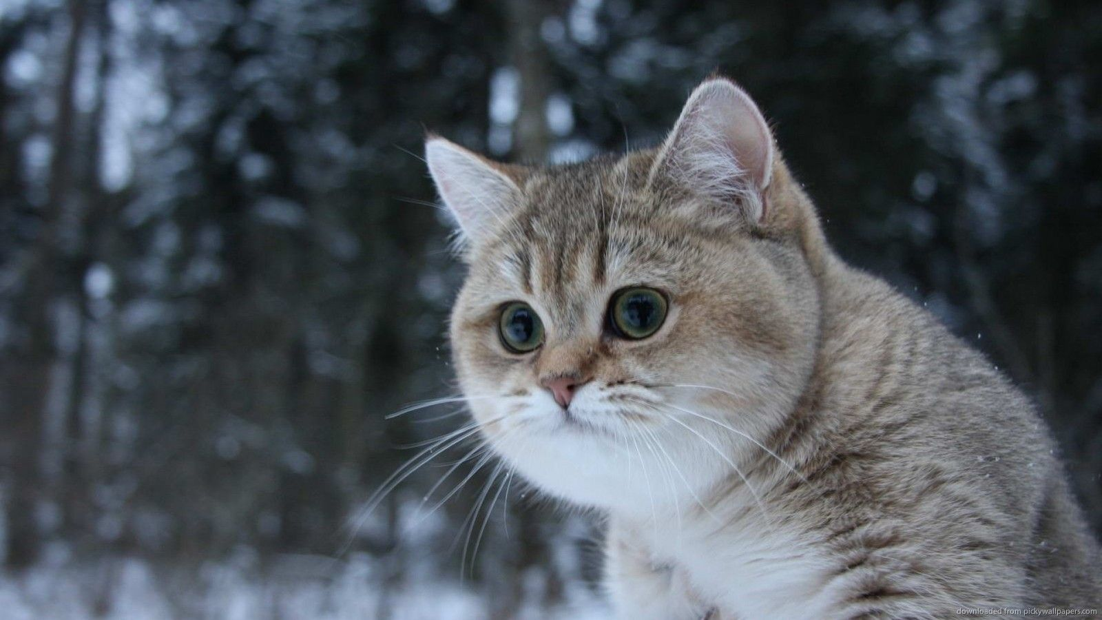 Awesome Cats That Cost a Fortune impressive