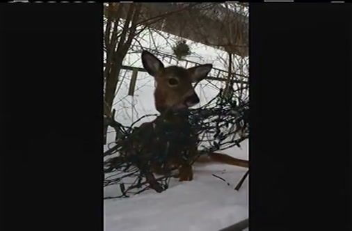A Cop Stopped To Admire A Deer, But Ended Up Saving Its Life. Watch What Happens At The End