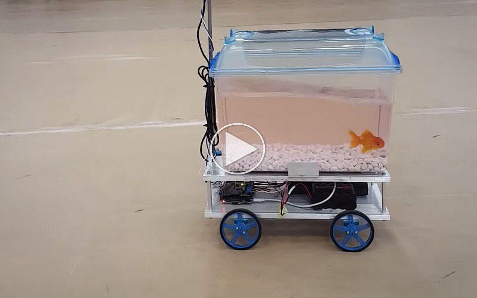 Fisk kører selv sit akvarium med hjul
