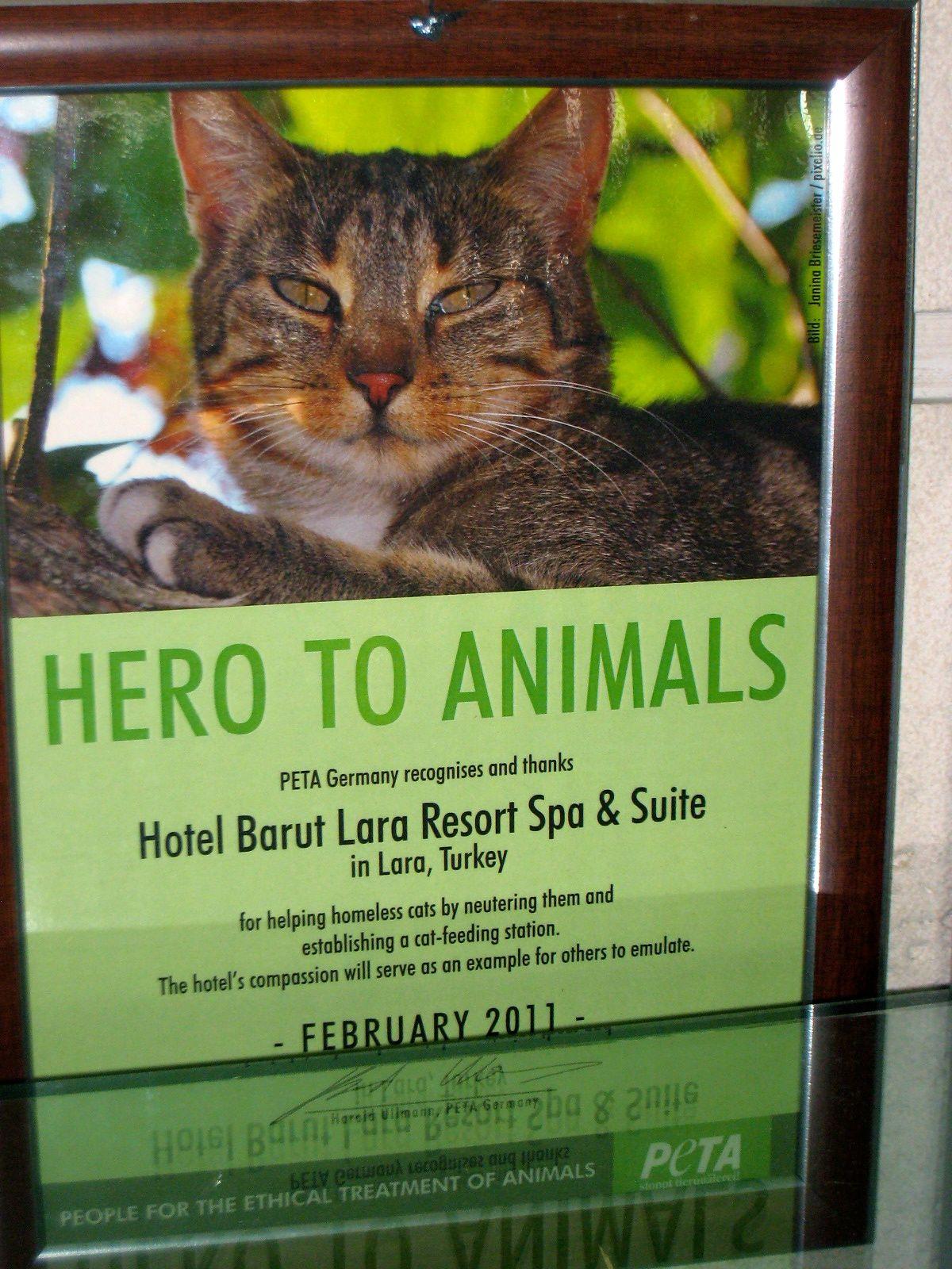 Hero To Animals