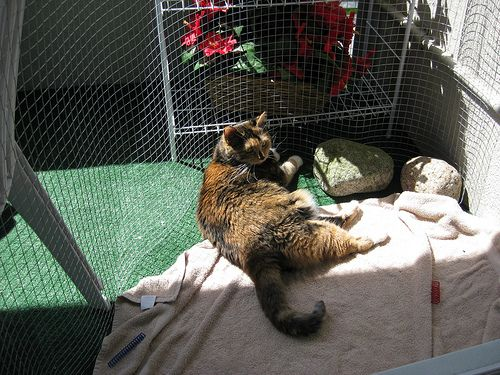 Cat-proofing Balcony - Page 2 - Cat Forum : Cat Discussion Forums