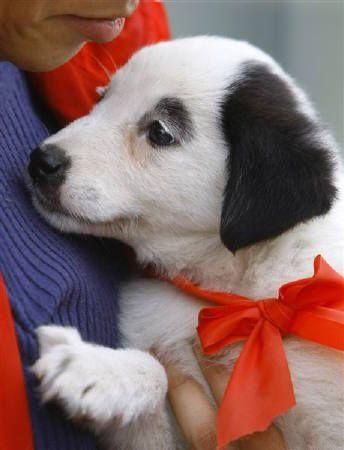 Omg Baby Snoopy Lookalike Even Has Eyebrows Like Snoopy Cute
