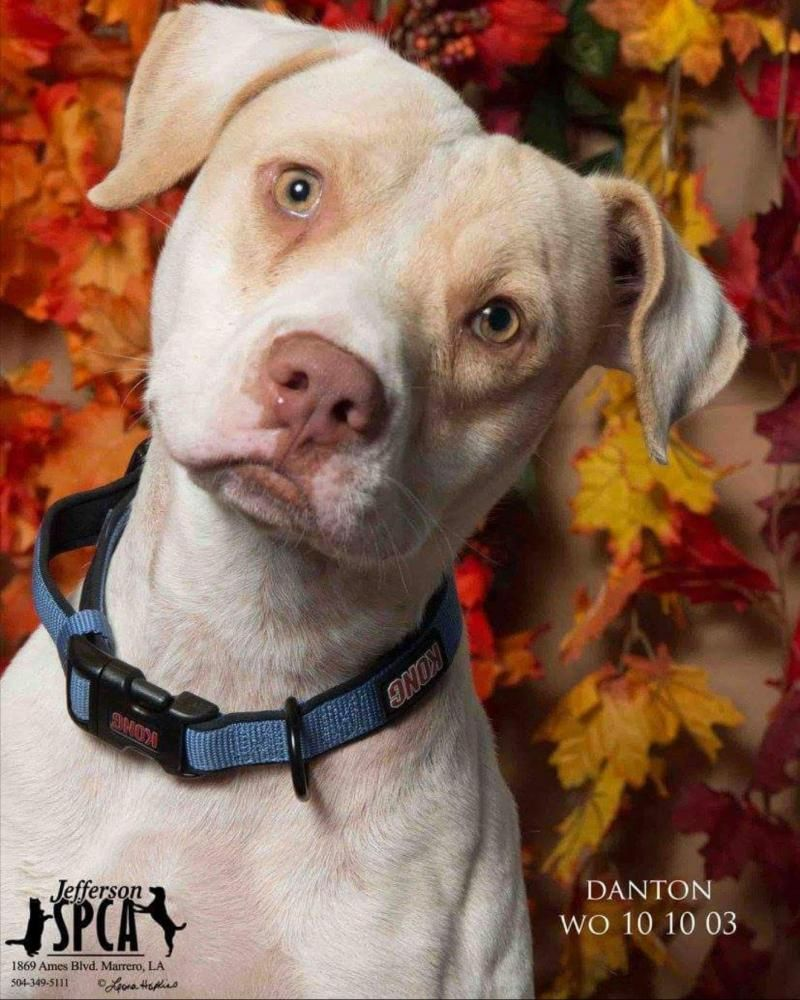 You Re Amazing Dog: Rescue Me Please -desperate -any Animal