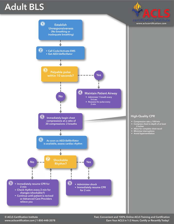 The Adult Bls For Healthcare Providers Algorithm By The Acls