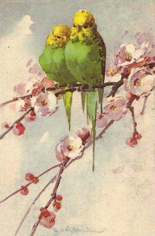балую, глотаю, открытки с цветами и попугаями меркурий