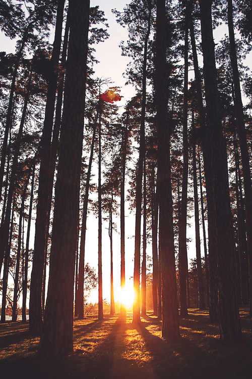 100 Tumblr Background Nature Trees Photography Sunrise