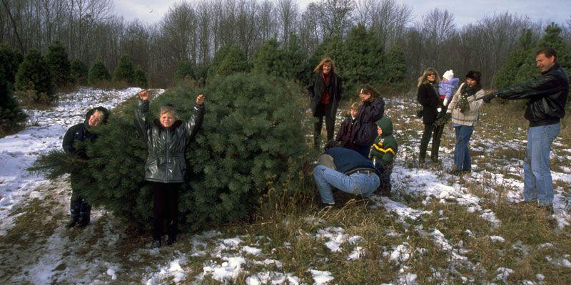 More Than A Christmas Tree Christmas Tree Christmas Tree Farm Tree Farms