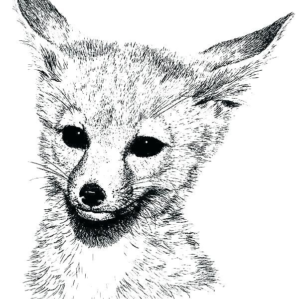 Red Fox Coloring Pages Baby Fox Coloring Pages Terry Fox Colouring