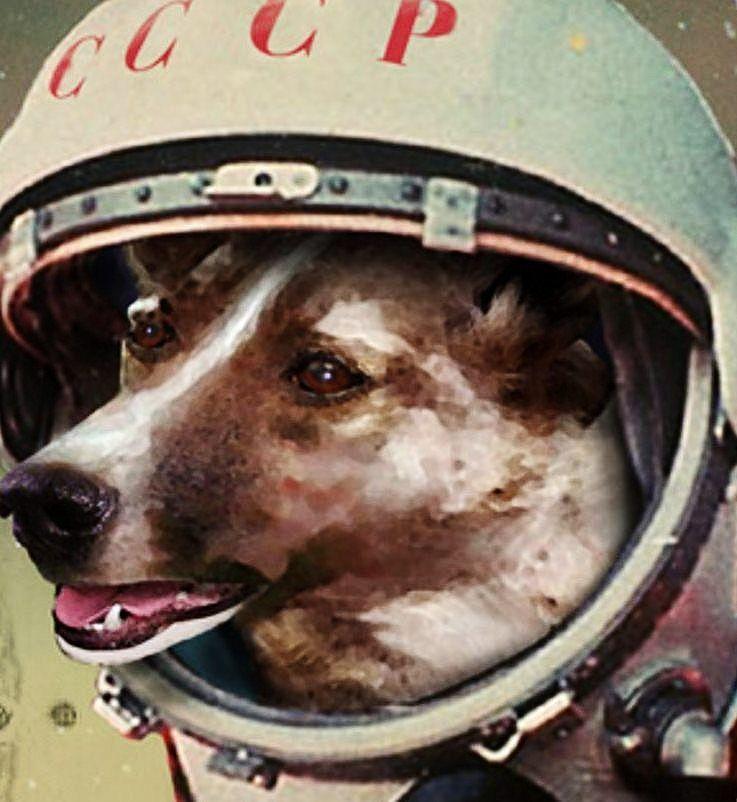 Resultado de imagen para Fotos de la perra Chernushka al espacio