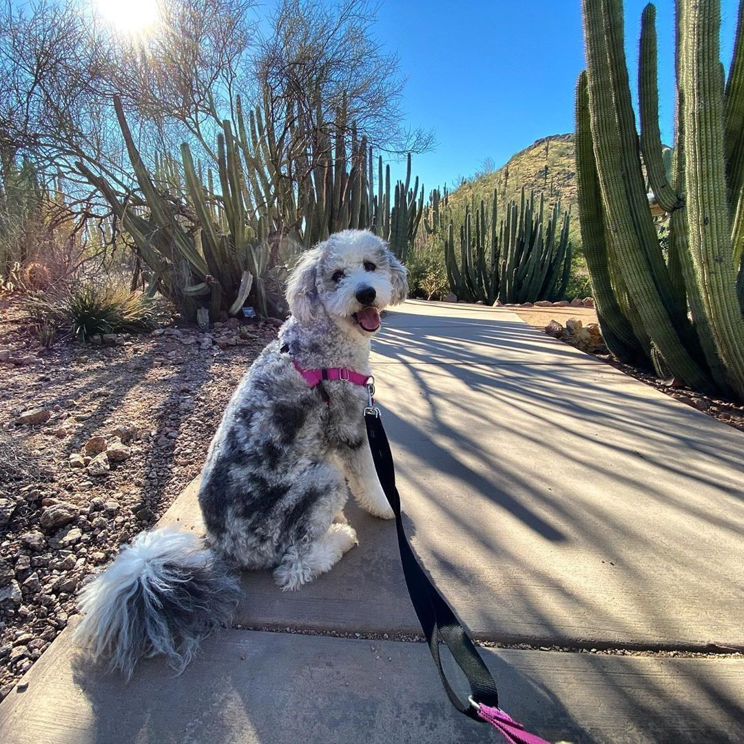 Desert Botanical Garden On Instagram Treat Your Dog To More Than Chimken And Scritches With A Morning Str Desert Botanical Garden Botanical Gardens Botanical
