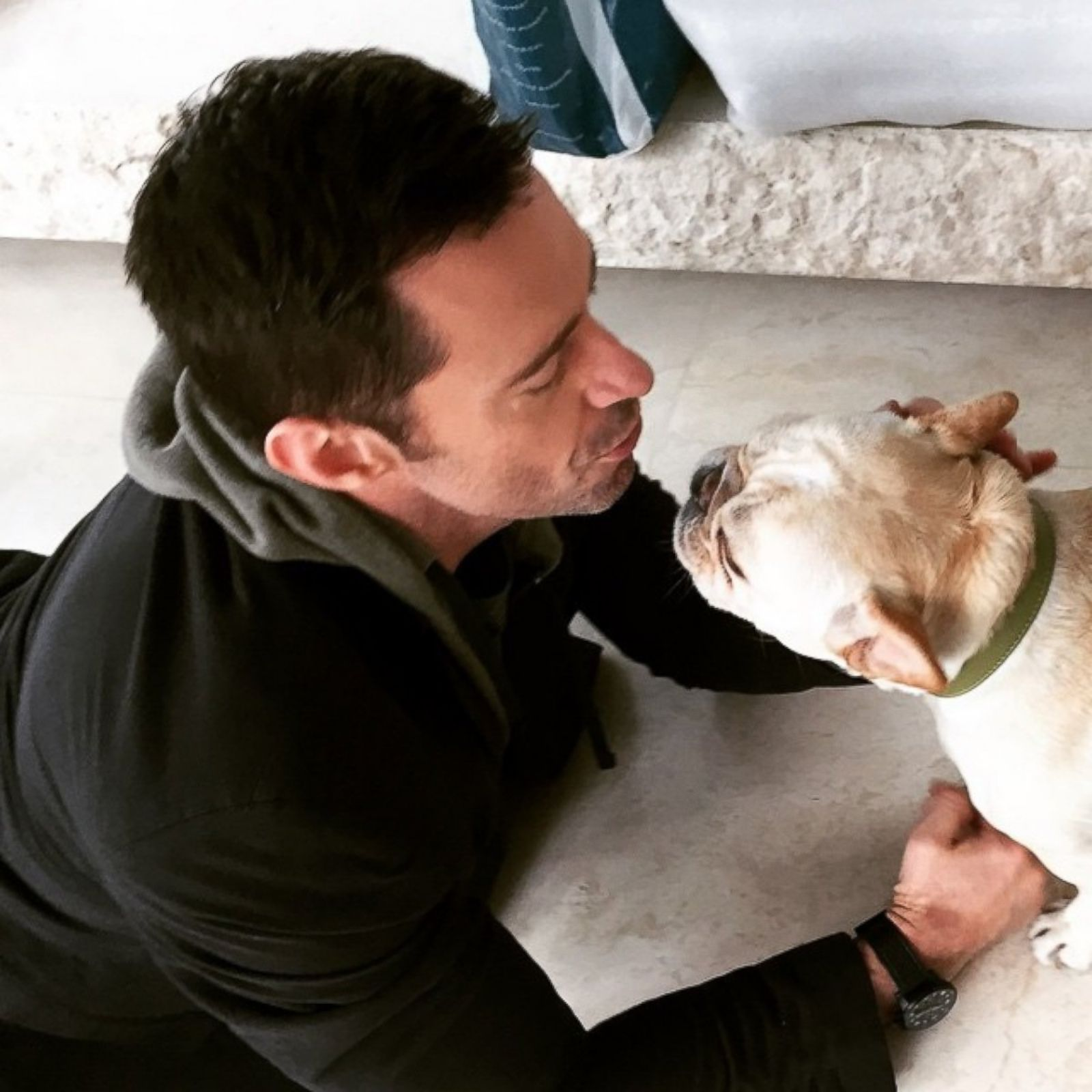 15 Reasons Hugh Jackman And His French Bulldogs Are The Only Things That Matter On The Internet