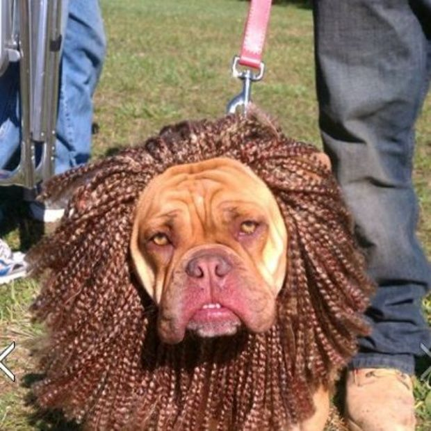 Pet Halloween Costumes | WBNS-10TV Columbus, Ohio | Halloween ...