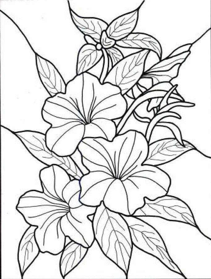 dibujos para colorear de flores exoticas … | kwiaty | Pinte…