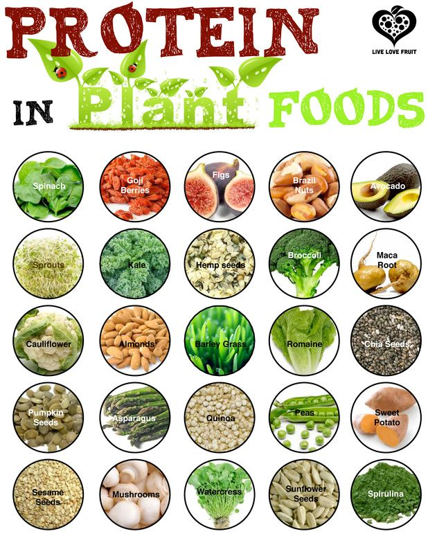 Free Download or Printable Protein in Plant Foods Foods