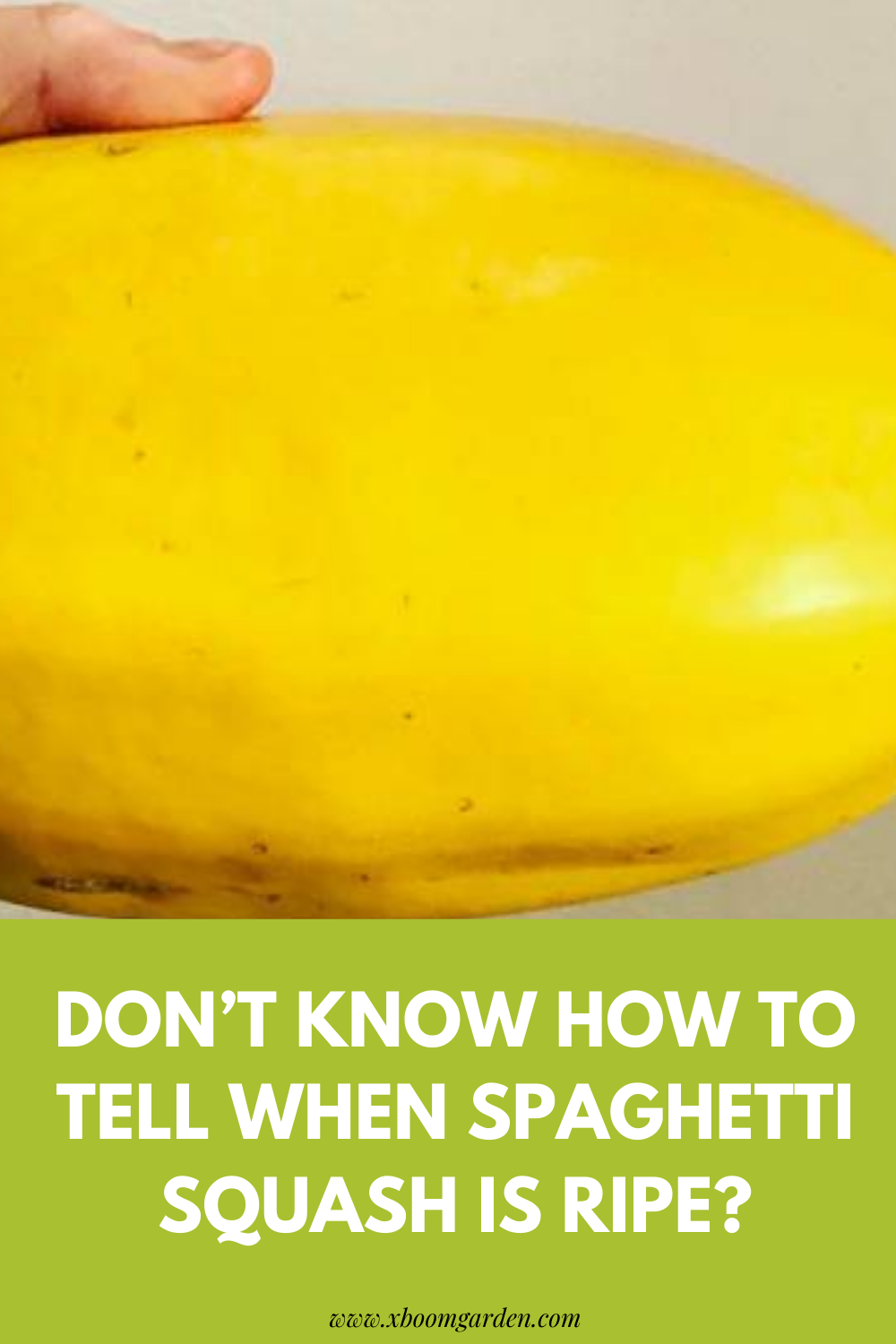 Don T Know How To Tell When Spaghetti Squash Is Ripe In 2020 Spaghetti Squash Healthy Benefits Squash