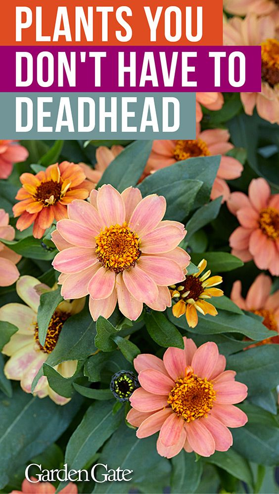 Container plants you don't have to deadhead! -   16 plants Flowers projects
