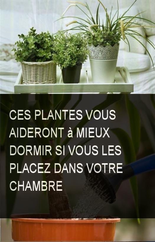 ces plantes vous aideront mieux dormir si vous les placez dans votre chambre astuce sant. Black Bedroom Furniture Sets. Home Design Ideas