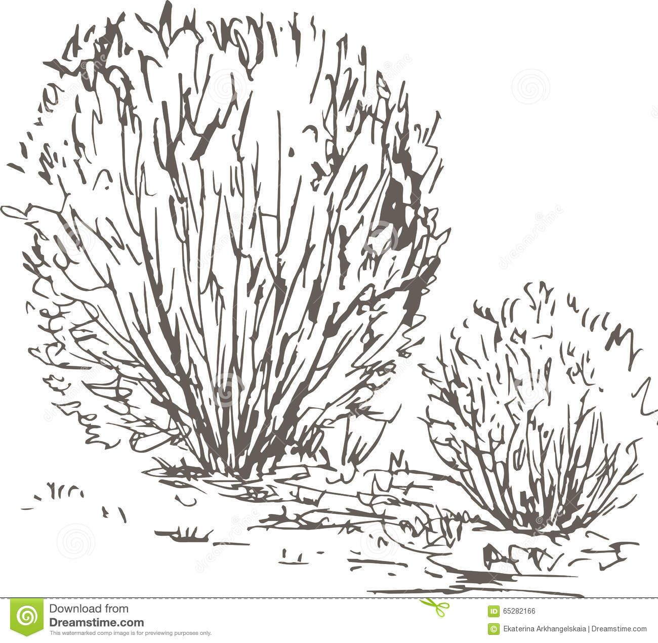 Resultado De Imagen Para Dibujar Arbustos Bocetos De Arboles Arbustos Imagenes Para Dibujar