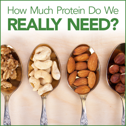 "4 spoons with 4 different types of nuts in them and the words ""How Much Protein Do We Really Need?"""