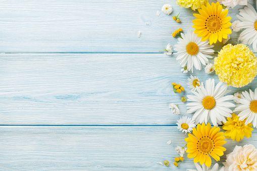 Garden Flowers Over Wooden Background Stock Photo Latar Belakang Kertas Dinding Bunga Daisy
