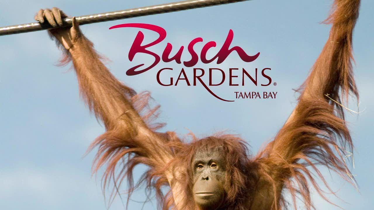animals busch gardens tampa my home state pinterest