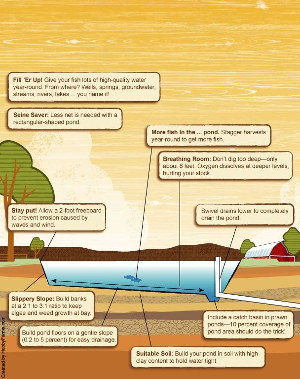 Illustration of aquaculture pond and tips of what to think for Pond building tips