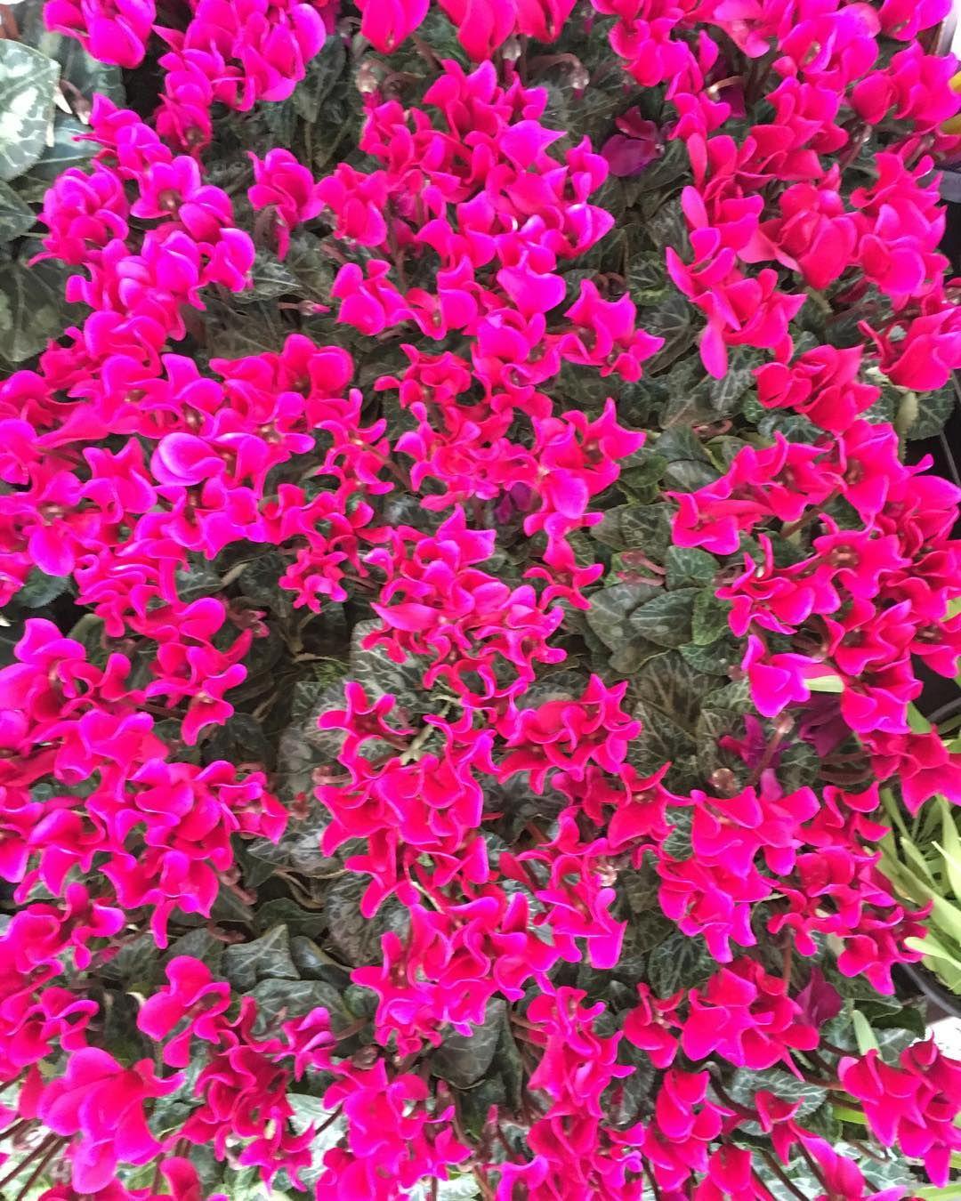 #SinFiltro ((Como las mujeres bellas)) - para nosotros es redundante -  No hay nada que nos haga pensar en lo contrario ustedes son El verdadero mood de inspiración #QueNadaTeDetenga #TuNosInspiras #YennyBastida #Pretaporter #flowerpower #floripondia #readytowear #estamosfelices #amamosloquehacemos #readytowear #tictac #newcollection #HechoenVenezuela #HechoaMano #LookYB #DiseñosParaTodaLaVida by ybpretaporter