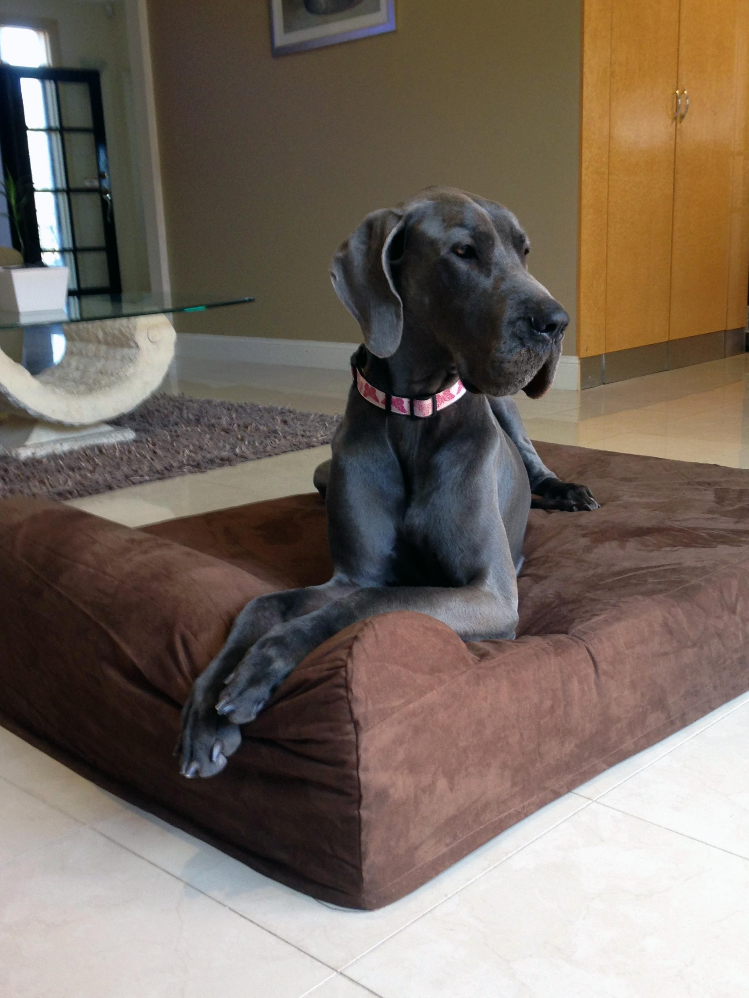 My Great Danes New Memory Foam Bed Great dane, Memory