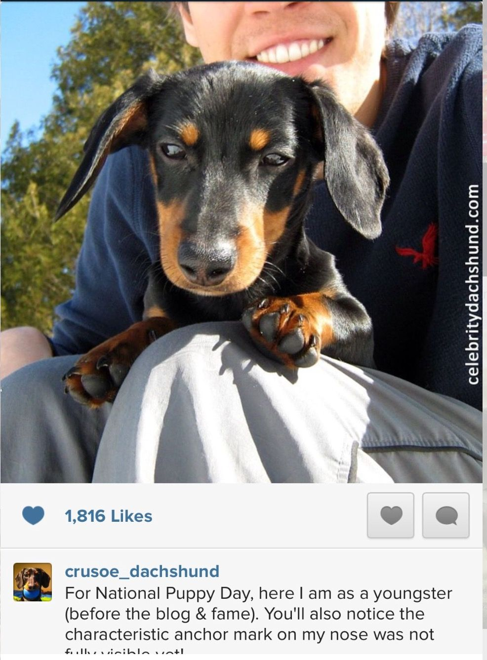 Crusoe Baby Picture Doggy Doxie