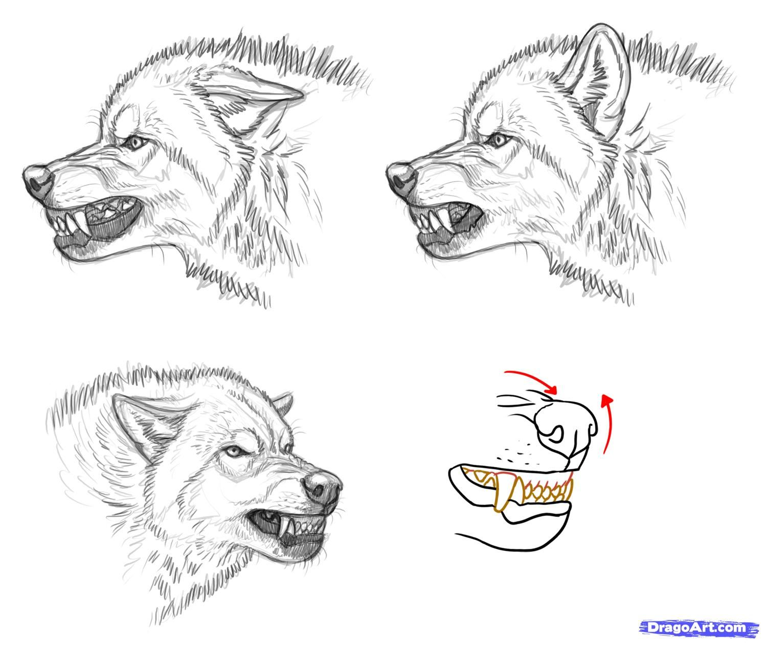 How To Draw An Angry Wolf By Makangeni Risunki S Volkami Sobaka