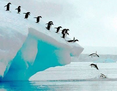Penguins - Pinquin
